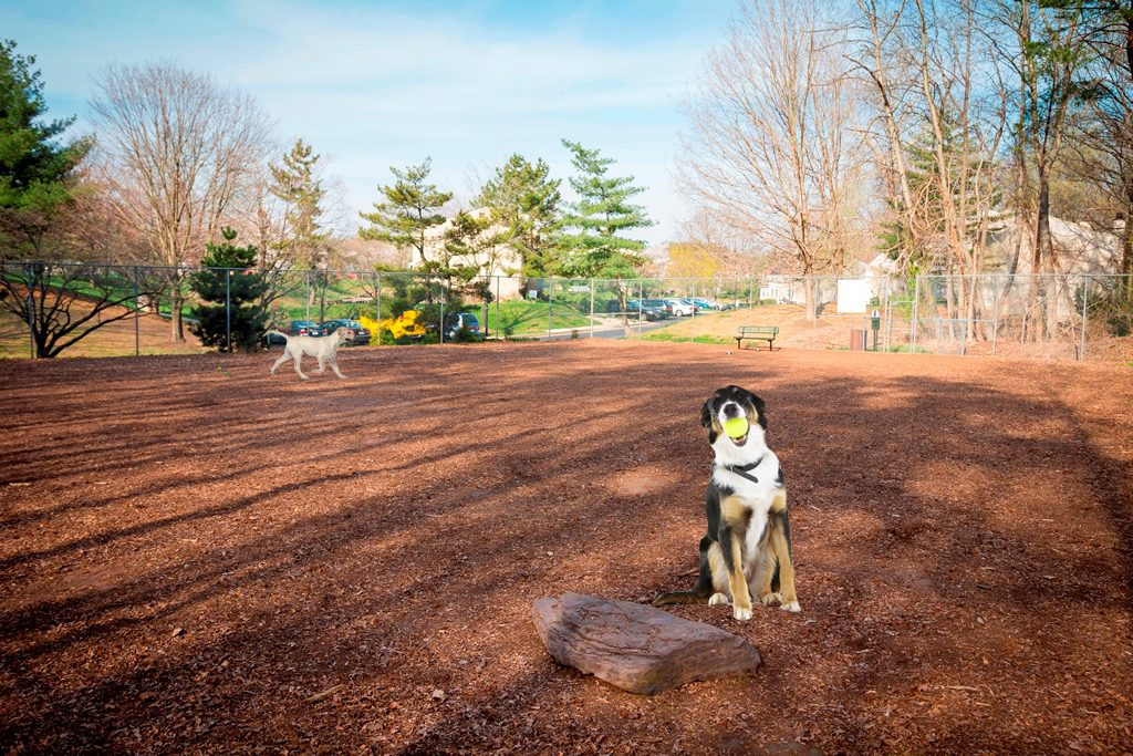 Dog-Park-NoText_0209