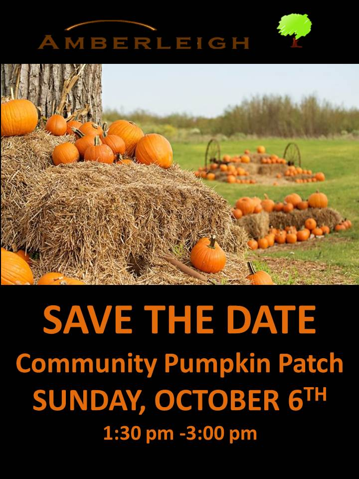 Pumpkin Patch 2019